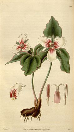 n144_w1150 by BioDivLibrary, via Flickr