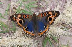 Flying Flowers, Butterflies Flying, Beautiful Creatures, Animals Beautiful, Cute Animals, Beautiful Bugs, Beautiful Butterflies, Butterfly Kisses, Butterfly Wings