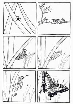 Crafts,Actvities and Worksheets for Preschool,Toddler and Kindergarten.Free printables and activity pages for free.Lots of worksheets and coloring pages. Preschool Science, Teaching Science, Science For Kids, Science Activities, Classroom Activities, Science And Nature, Hungry Caterpillar Activities, Butterfly Coloring Page, Insect Crafts