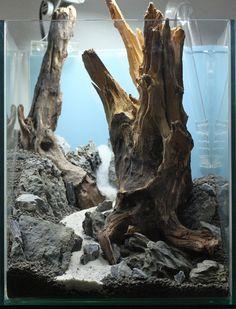 Driftwood hardscape