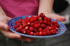 it take forever to pick but worth the effort! Raspberry, Strawberry, Berry Picking, Norwegian Food, Clean Plates, Good Food, Yummy Food, Wild Strawberries, Summer Berries