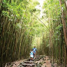 Things to do in Hawaii: Bamboo forest on Maui - Sunset.com