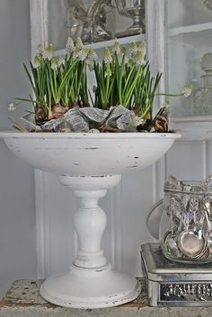 Dekoration pärlhyacinter The Effective Pictures We Offer You About bright spring flowers A quality p Vibeke Design, Pot Plante, Spring Bulbs, Bulb Flowers, Spring Flowers, Vintage Decor, Houseplants, Decoration, Container Gardening