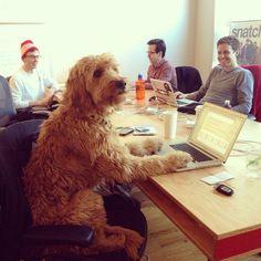 funny dog pics office
