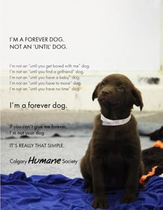 "I'm a forever dog....not an ""until you have a baby dog"""