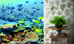 great_barrier_reef_photos15