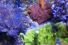 Jūrinis akvariumas Lps, Vegetables, Vegetable Recipes, Veggies