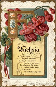Free Vintage Flowers and Seed Packets Images Vintage Diy, Vintage Labels, Vintage Images, Vintage Stuff, Decoupage, Vintage Greeting Cards, Vintage Postcards, Vintage Seed Packets, Fuchsia Flower