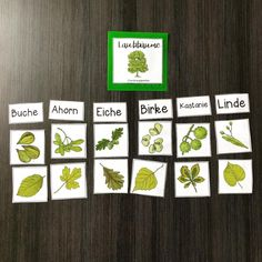 Kindergarten Reading - Fushion News Make Your Own Pizza, Selling Handmade Items, German Words, Tree Images, Deciduous Trees, Kindergarten Reading, Woodland Party, Science For Kids, Childhood Education