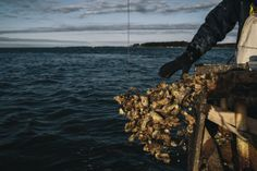 Floyd Chance Jr. discards worthless oysters into the Chesapeake Bay in March on the last day of oyster season. Maryland's once-plentiful resource has been declining, along with populations of crab and fish, but the sea level has been rising. The long-term survival of some Eastern Shore communities is in question as young people move out, abandoning jobs in the seafood industry and homes at risk of flooding.