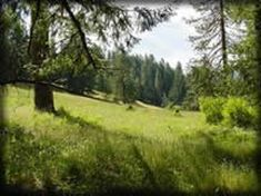 Near by attractions for Crater Lake [PHOTO: Open Meadow in Lower Elevation Forested Area] Forest Road, Forest House, Umpqua Hot Springs, Oregon Nature, Oregon Camping, Klamath Falls, Cottage Grove, West Coast Road Trip, Cedar Park
