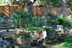 Barrel Garden Ideas | 21 Ways to Reuse A Barrel On Your Homestead | Awesome DIY Projects for your Home by Pioneer Settler at http://pioneersettler.com/wine-barrel-ideas/