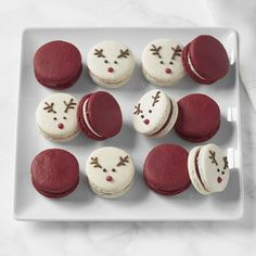 Shop Williams Sonoma's ultimate collection of Christmas chocolate gifts. Our holiday candy gift sets and Christmas chocolate gift sets are the perfect stocking stuffers. Christmas Candy Gifts, Christmas Snacks, Christmas Cupcakes, Holiday Cookies, Christmas Chocolates, Macarons Christmas, Cute Desserts, Holiday Baking, Christmas Desserts
