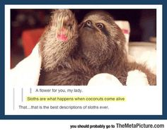Quite Possibly The Best Description Of Sloths Ever