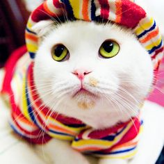 This is one stylish kitty!