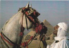 Blue Sky Travel Egypt - Desert in Egypt