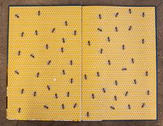 The history and design of endpapers; via Chronicle Books