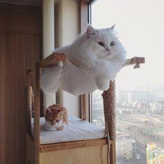 いいね!10.5千件、コメント85件 ― Sweet Catsさん(@sweetcatonline)のInstagramアカウント: 「Lol   From @yisemoon         #kids #instakids #ig_kids #cute #children #instagram_kids…」