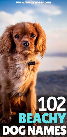 Female Puppy Names Unique, Rare Dog Names, Cute Dog Names Boy, Girl Dog Names Unique, Puppies Names Female, Pet Names, Cute Names For Puppies, Cutest Dog Names, Good Dog Names