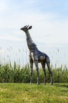 2ft baby giraffe metal sculpture from Pangea