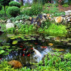 Beautiful Pond.