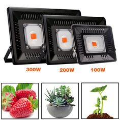 COB Led Grow Light Full Spectrum for Vegetable Flower Indoor Hydroponic Greenhouse Plant Lighting Lamp Plant Lighting, Outdoor Lighting, Indoor Flowers, Indoor Plants, Greenhouse Plants, Grow Tent, Led Grow Lights, Plant Growth, Hydroponics