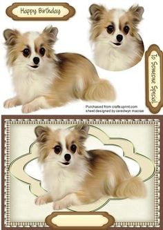 Beautiful Chihuahua pup  on Craftsuprint designed by Ceredwyn Macrae - A Lovely card to make and give to anyone on there special day Beautiful Chihuahua pup a lovely card and a lovely pup, has two greeting tags and a blank one for you to choose the sentiment, - Now available for download!