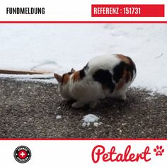 15.01.2019 / Chat / VionnazValais / Suisse Rabbit, Animals, Switzerland, Cat Breeds, Bunny, Rabbits, Animales, Animaux, Bunnies