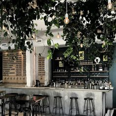 bar with plants