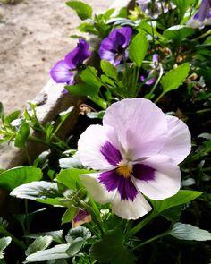 #natural #color #verde #violeta #green #violet