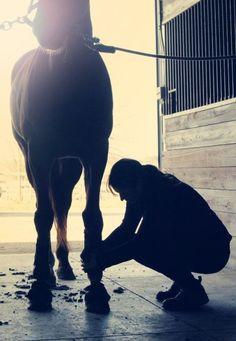 #Equestrian #Horses