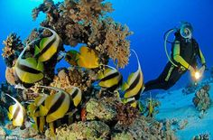 Cairo Red Sea diving Tour 8 days. Cairo and Red Sea tour is a perfect tour to keep balance between sightseeing and relaxation, one can ‎see the pyramids & Sphinx and snorkel in Red Sea.‎ http://touregyptclub.com/travel/tour-packages/red-sea-diving-holidays/cairo-red-sea-diving-tour-8-days