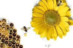 Mehiläispesä on ihmelaitos - Artikkelit - Tiede