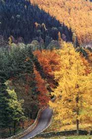 Courtyard Cards   Farfield Mill Sedbergh - Autumn Colours
