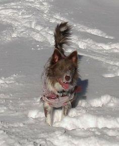 Izzy the snow border...