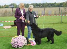 Auch ein Champion muss lernen Champion, Dogs, Animals, Proud Of You, Studying, Animales, Animaux, Pet Dogs, Animais