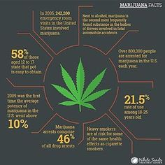 Marijuana Facts: marijuana dispensaries, how to grow marijuana, florida medical…
