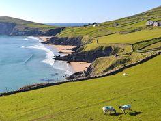 Ireland's westernmost landmark, Dingle Peninsula is all about surf beaches, Caribbean-like blue ocea...