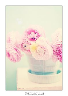 Ranunculus by lucia and mapp, via Flickr
