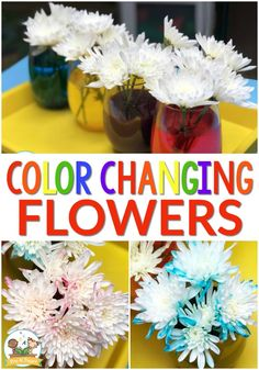 Color Changing Flowers Science Experiment - Pre-K Pages