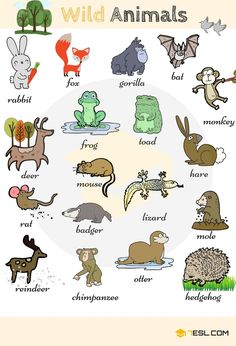 Wild Animals: List of Wild Animal Names . - Wild Animals: List of Wild Animal Names with Images – 7 E S L - English Time, English Study, English Words, English Grammar, Learn English, English Resources, English Activities, English Lessons, English Language Learning