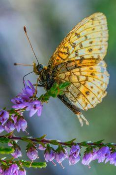 .**Butterfly. (Photo By: Geert Weggen on 500px.)