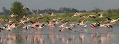 Bhigwan Bhuleshwar Bird watching >>>#wildlife #Maharashtra