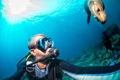 Tom Forlander enjoys diving off the reef and exploring the beauty of the Florida coast. For More Information Visit Here:- http://tomforlander.yolasite.com/