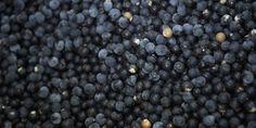 Super food- acai berries