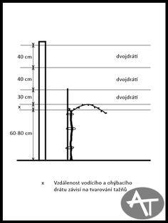 Výsledek obrázku pro vinná réva pěstování Line Chart, Utility Pole, Rv, Garden, Motorhome, Garten, Lawn And Garden, Gardens, Gardening