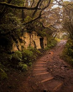 Parque Rural Anaga (Tenerife) Canario, Canary Islands, Spain Travel, Natural Beauty, Places To Go, Country Roads, Adventure, Instagram, Nature