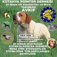 Alianz Dog Show Turkey 2018 - Alianz Federation Dog Show, Turkey, Dogs, Animals, Animales, Turkey Country, Animaux, Animal Memes, Animal