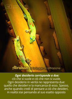 Abraham e la legge di attrazione #loa #abraham #thinkdifferent #geco