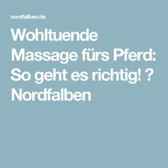 Wohltuende Massage fürs Pferd: So geht es richtig! ⋆ Nordfalben